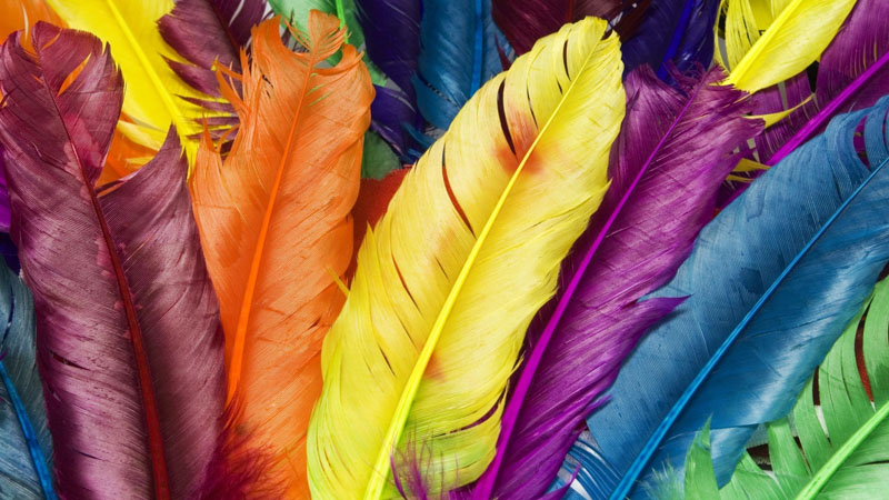 feathers_in_colors-1680x1050 (2).jpg